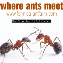 Formica Ant Farm